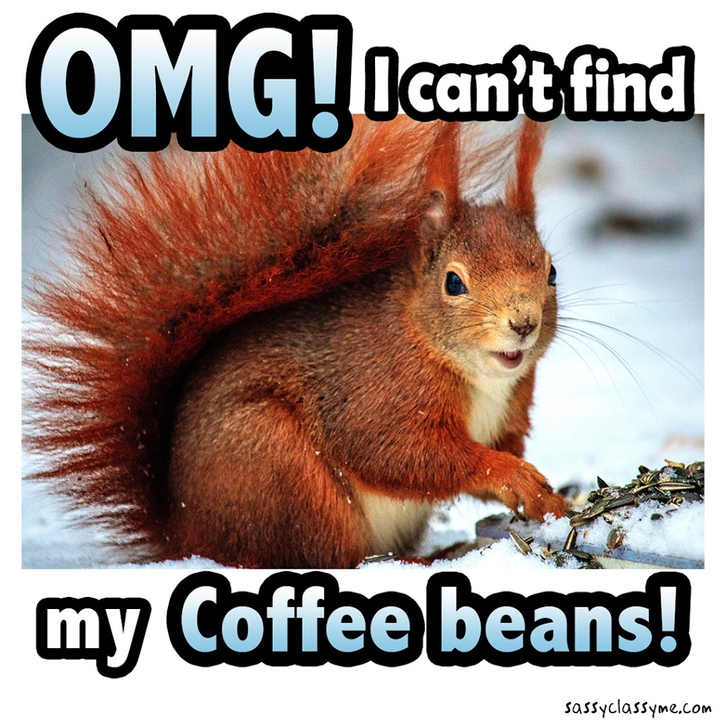 I can't find my coffee beans sassyclassyme