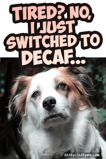Tired No I Just Switched To Decaf Funny Dog Coffee Meme