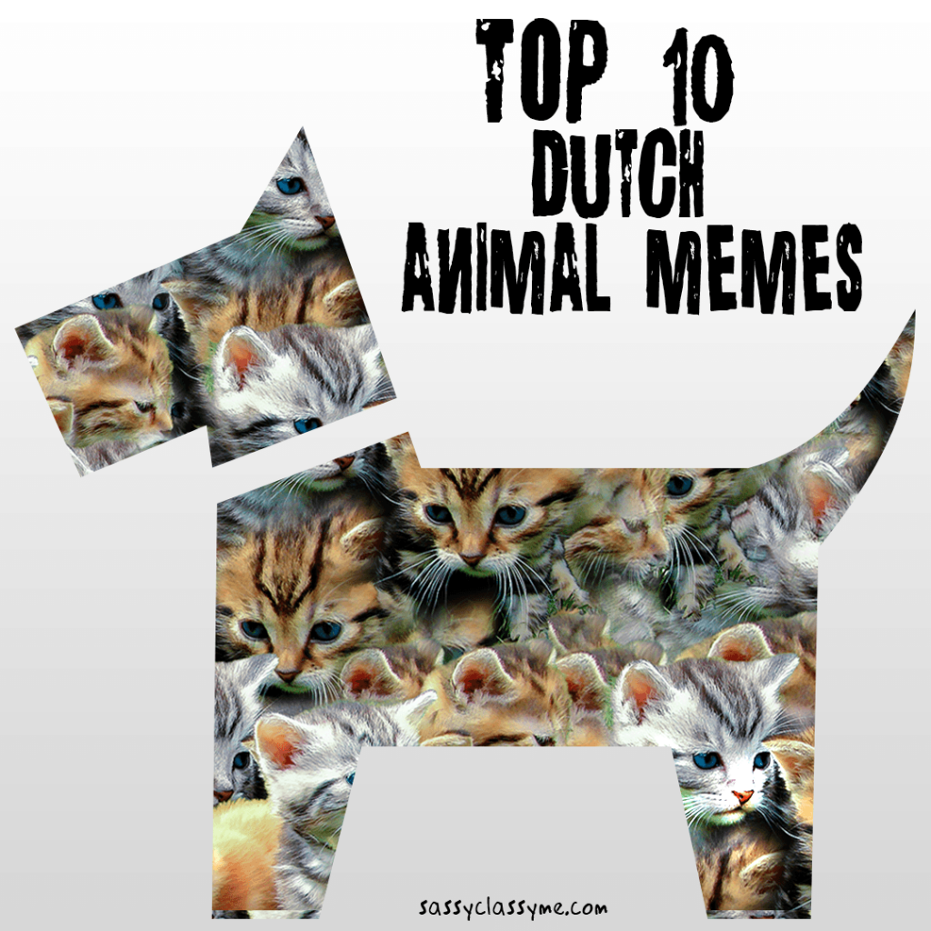 Top 10 Dutch Animal Memes Sassyclassyme
