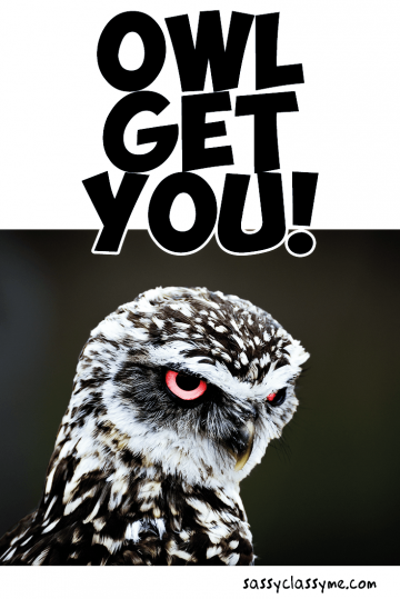 OWL GET YOU Funny Animal Pun Meme